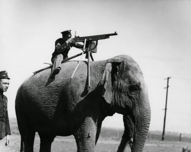 File:AprilFools machinegun elephant.jpg